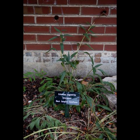 UIC Atkins Medicinal Garden